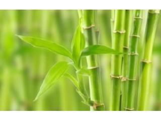 Бамбуковые матрасы - что это такое?